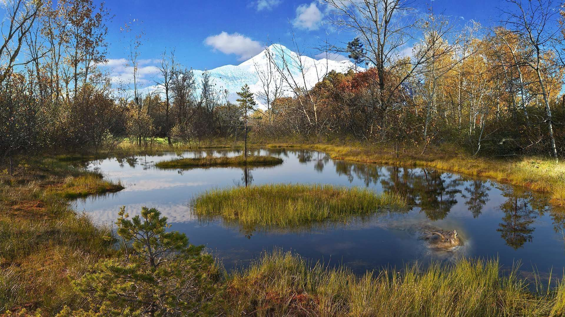 Mountain Swamp Scene
