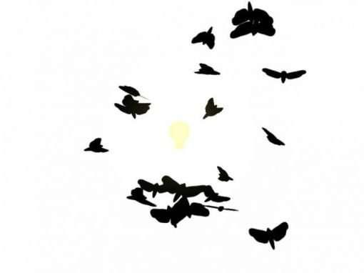 Moth Swarm